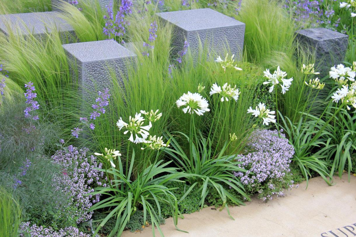Des graminées comme décor de jardin